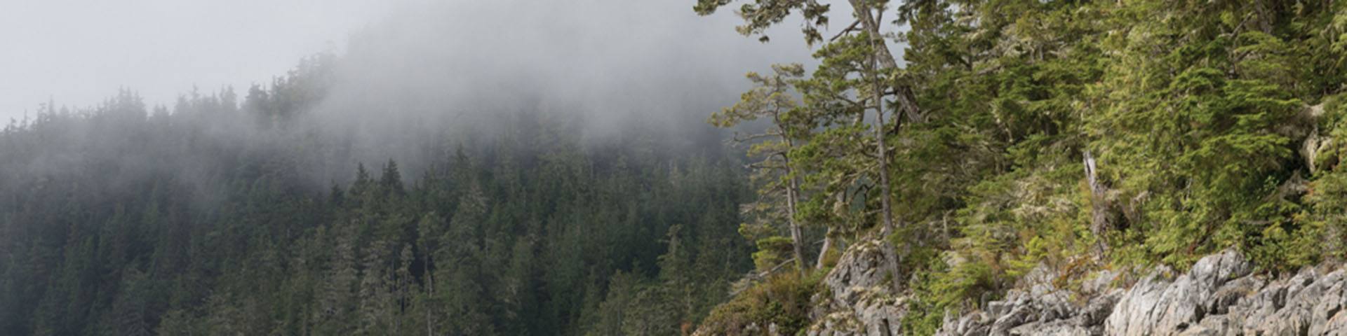 Great Bear Rainforest Expedition by Spirit of the West Adventures - Image 174
